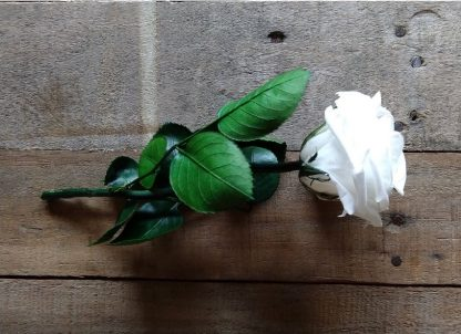 comprar rosa preservada